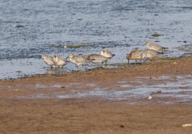 knot-at-spurn